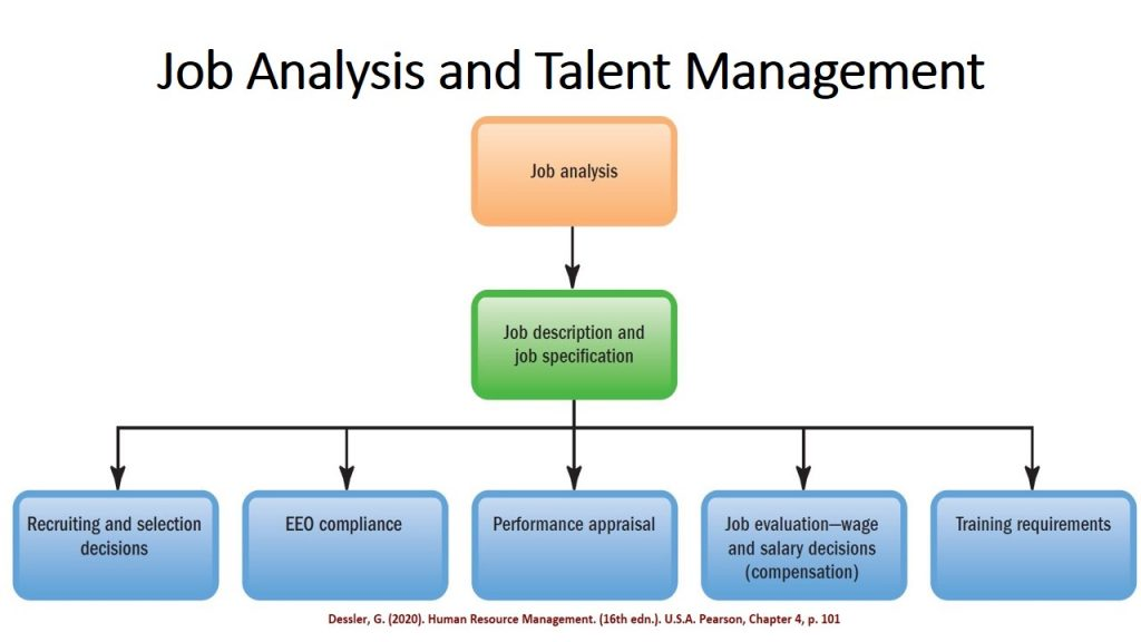 Job analysis and its resultant job profile form the basis of recruitment, placement, and other HR and talent management process and decisions.